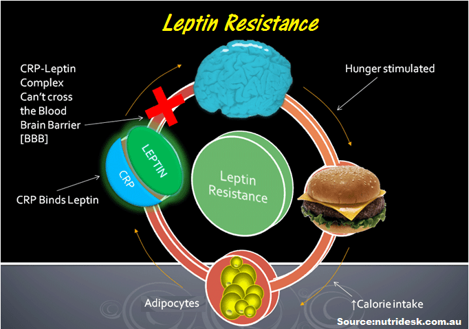 Bad-Effects-Of-Leptin-Reistance