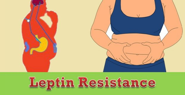 Leptin Resistance Facts