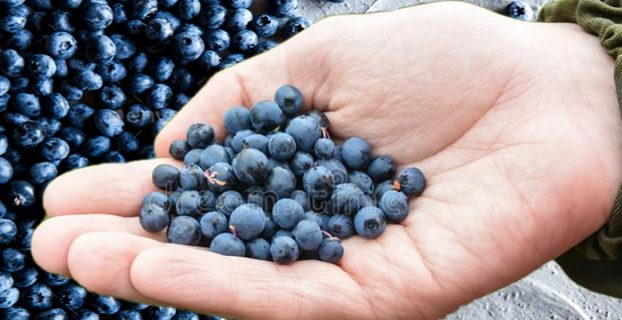 Holding Blueberries in Hand