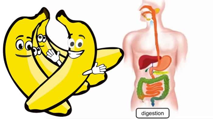 Banana Helps Digestion
