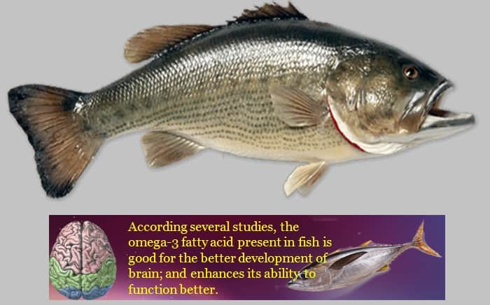 Fish Is Good For The Brain