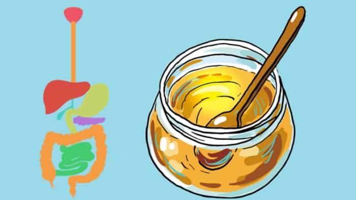 Honey And Digestion