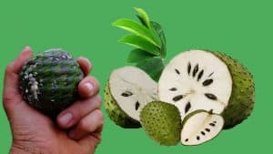 Usefulness of Soursop Tea For Health