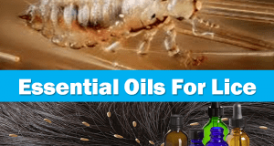 Essential Oils For Lice