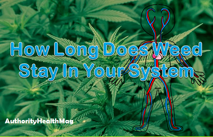 How Long Does Marijuana (Weeds) Stay In Your System