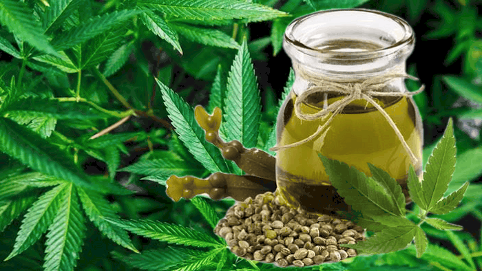 Hemp Seed Oil As Substitute For Coconut Oil