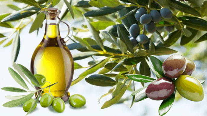 Olive Oil As Substitute For Coconut Oil