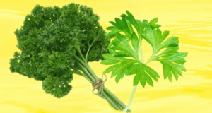 Parsley Substitute