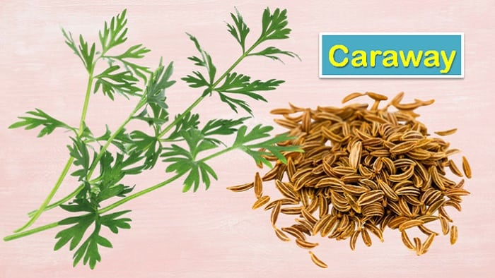 caraway seeds substitute
