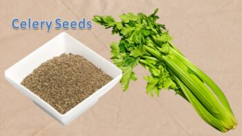 substitute for celery seed