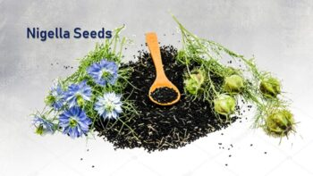 Nigella Seeds Substitute – 4 God Alternatives To Use