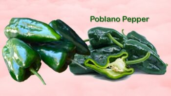 poblano pepper substitute