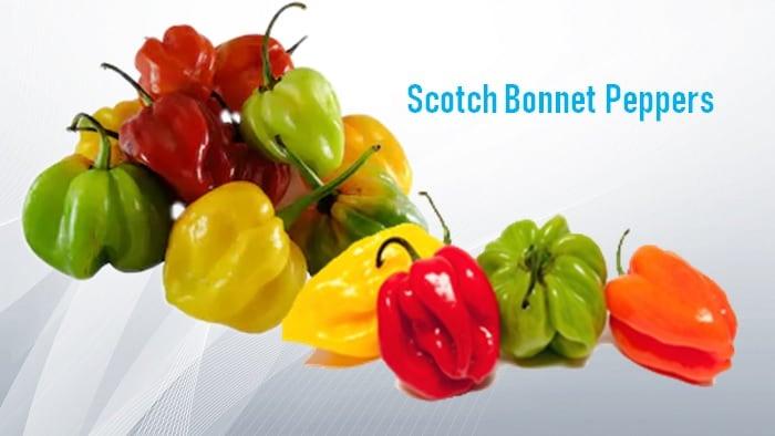 scotch bonnet pepper substitute