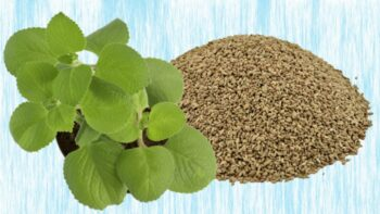 carom seeds substitute