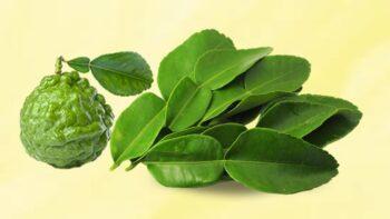 kaffir lime leaf substitute