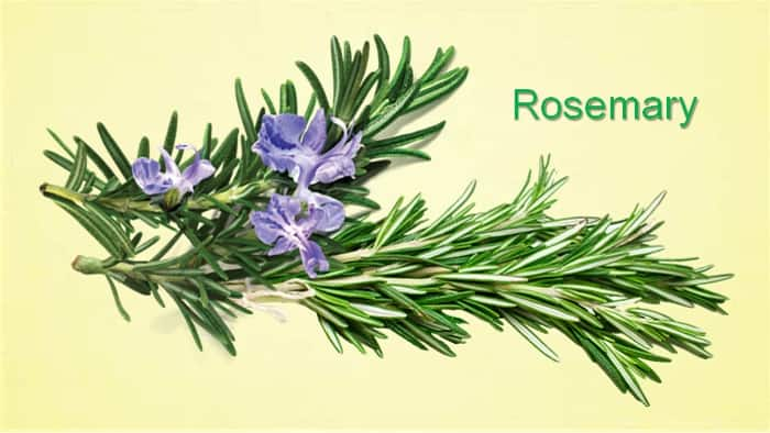 rosemary substitute