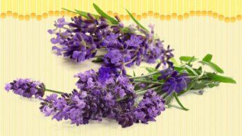 lavender substitute