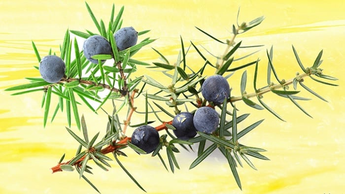 juniper berries substitute