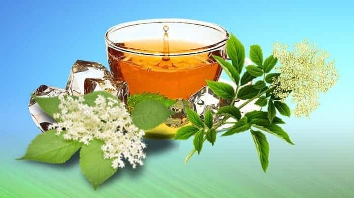 elderflower benefits