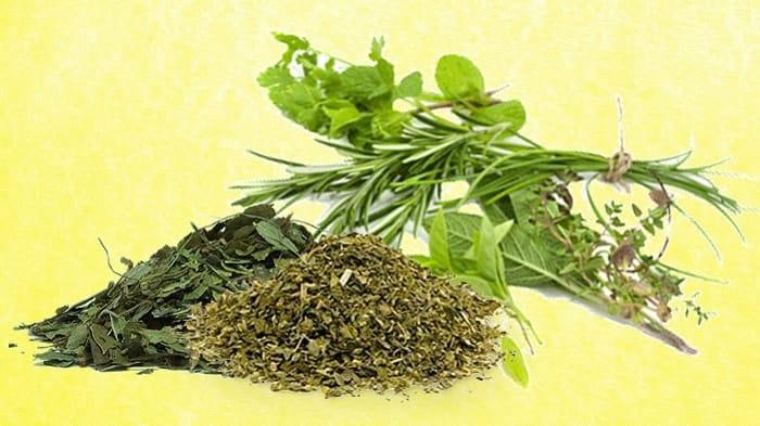 Dried Herbs Vs Fresh Herbs Comparison