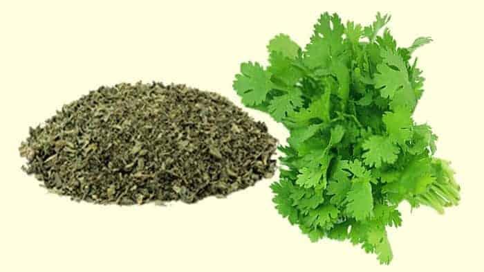 fresh and dried cilantro